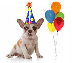 Birthday doggy