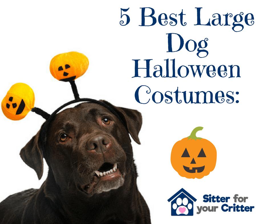 the 5 best large dog halloween costume ideas