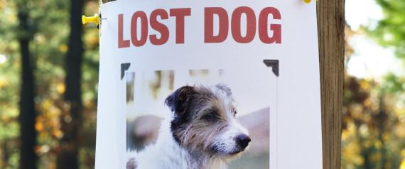 What do I do if my dog gets lost?