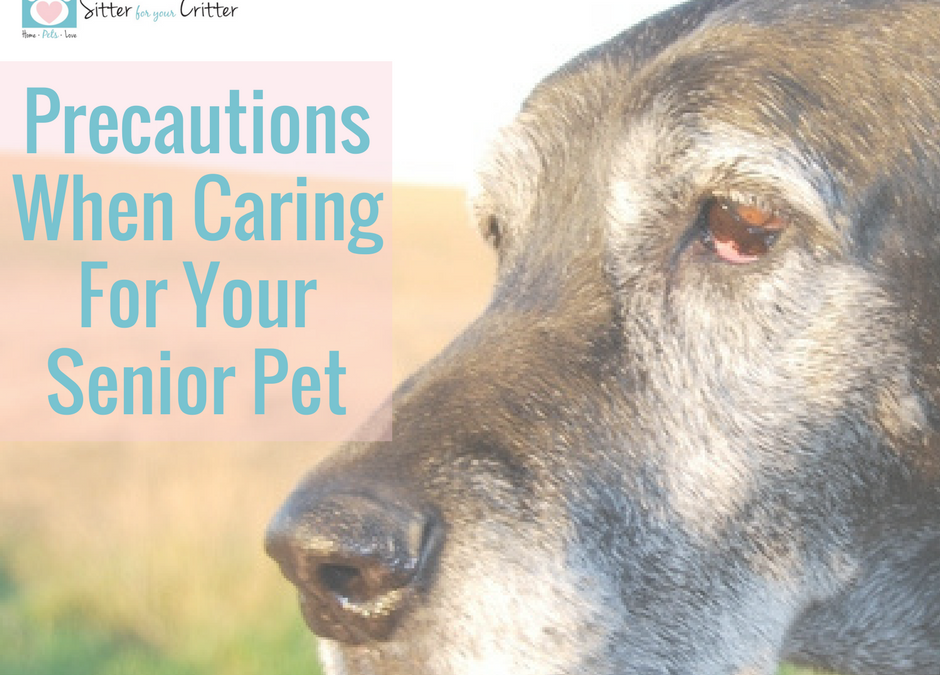 Precautions when caring for your senior pet