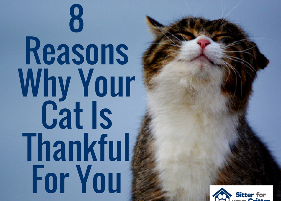 8 Reasons Why Your Cat Is Thankful For You.