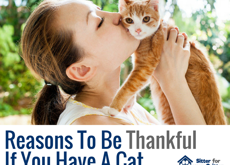 Reasons To Be Thankful If You Have A Cat