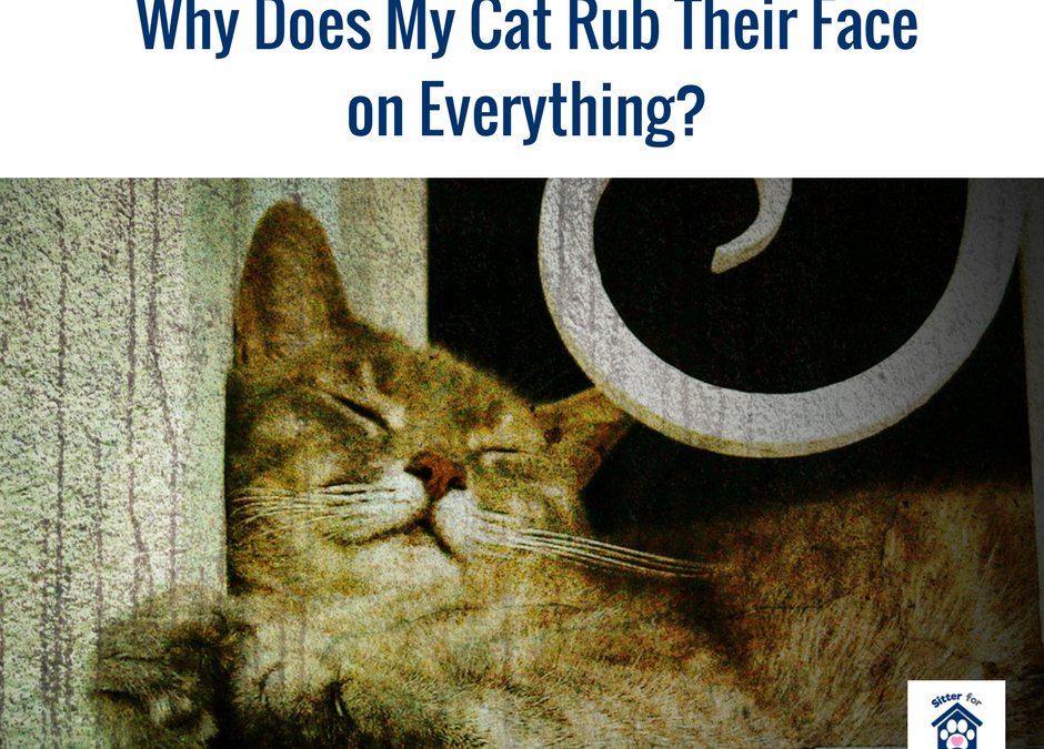 Why Does My Cat Rub It's Face On Everything?