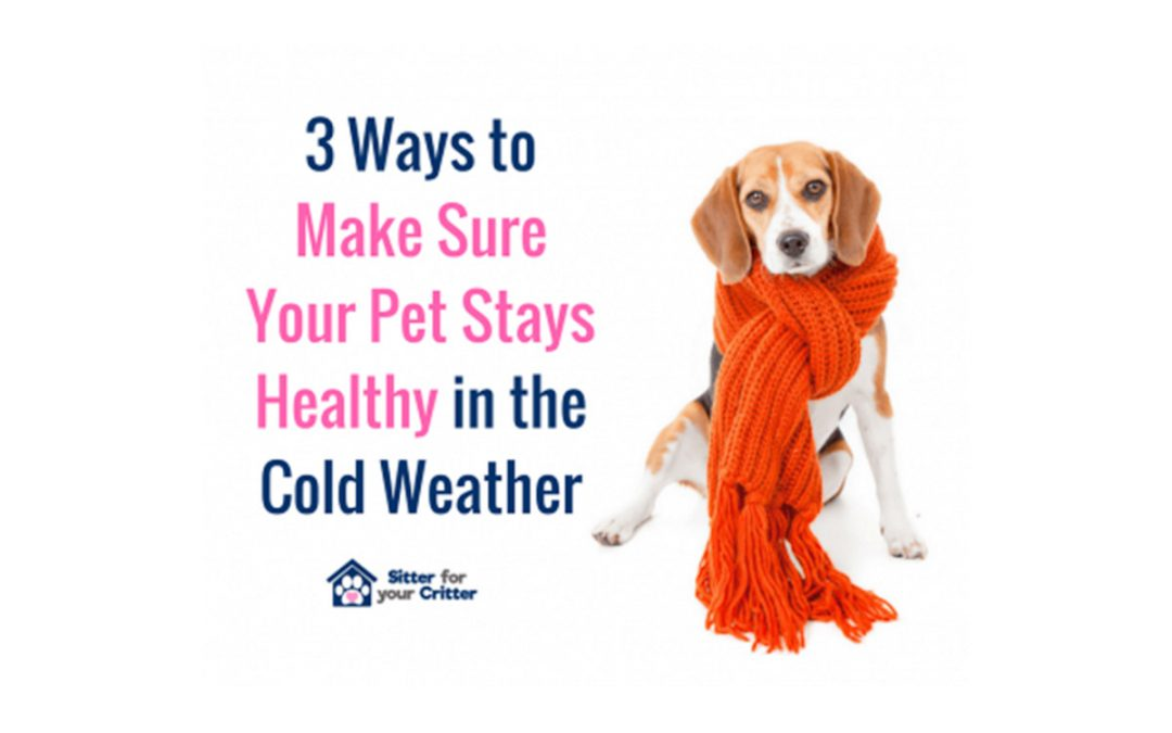 3 Ways to Make Sure your Pet Stays Healthy in the Winter