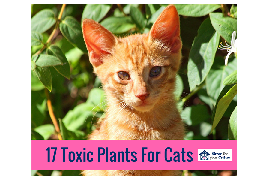 17 Toxic Plants for Cats
