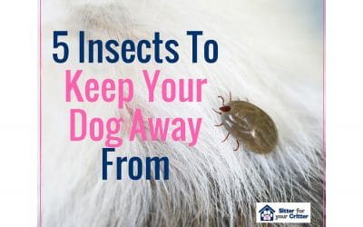 5 Insects That You Should Keep Your Dog Away From