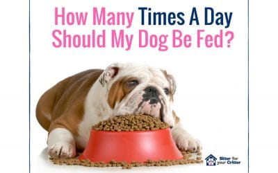 How many times a day you should feed your dog?