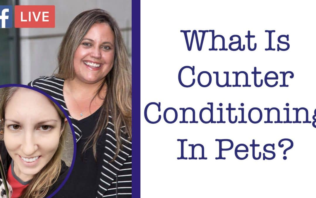 Counter Conditioning with Lauren Molina from Canine Concierge – Critter Chat Episode 1