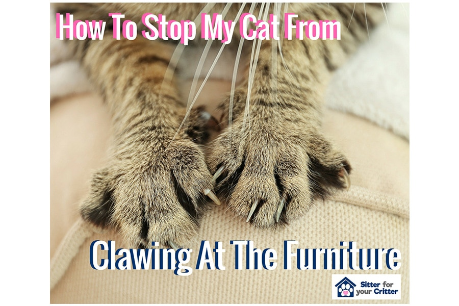 How To Stop My Cat From Clawing At The Furniture