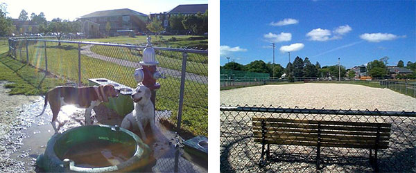 Best dog parks in Portsmouth