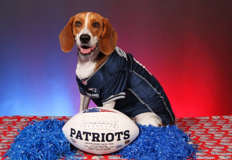 Cutest Dog Football Fans! Ideas For How You And Your Dog Can Celebrate This Football Season